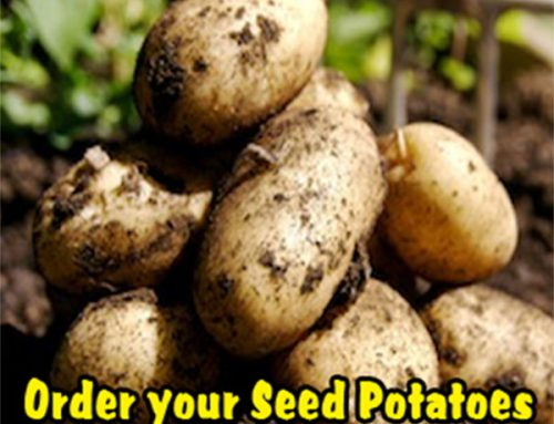 Seed Potatoes – NOW AVAILABLE